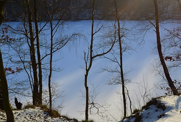 Wintry Chilly Winter Forest Geforener Lake