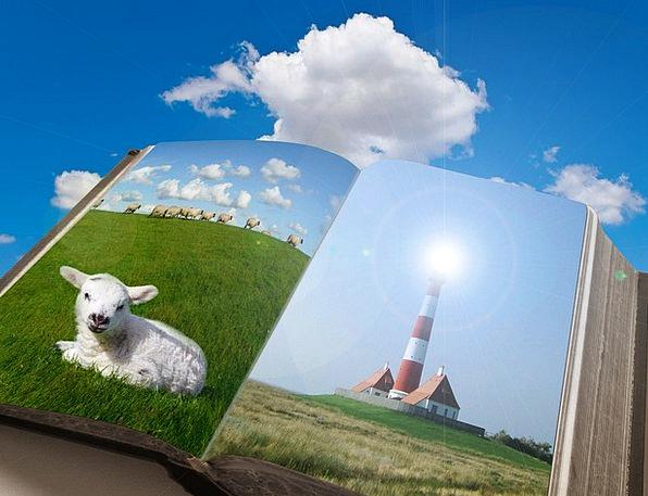 Book Volume Lawn Sky Blue Grass Meadow Lamb Beef S