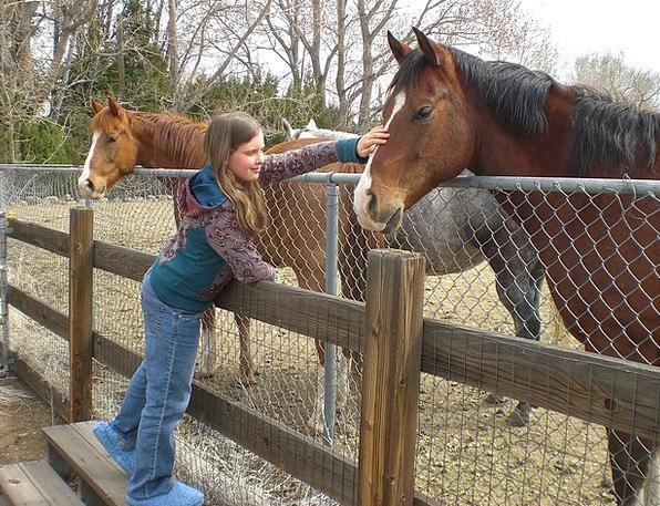 Horse Mount Lassie Friends Networks Girl