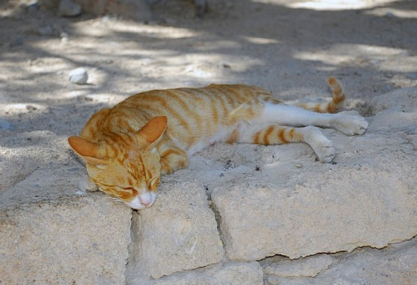 Cat Feline Domesticated Animals Faunae Pet Animal