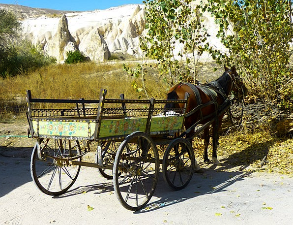 Coach Trainer Horse Mount Horse Drawn Carriage Wag