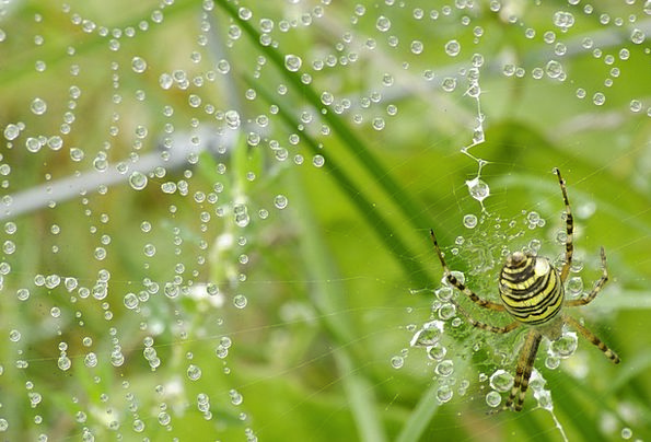 Spider Landscapes Droplet Nature Nature Countrysid