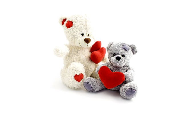 Teddy Tolerate Bears Tolerates Bear Love Animal Ph