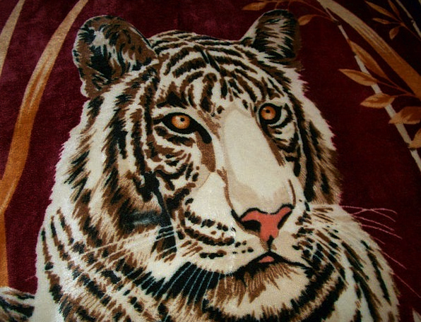 Tiger White Snowy Bengal Head Skull Wildcat Predat