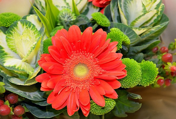 Flowers Landscapes Florae Nature Nature Countrysid