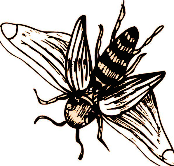 Bee Strips Wings Annexes Stripes Insect Bug Free V