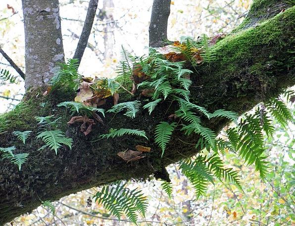 Fern Leaf Landscapes Sapling Nature Moss Tree Fore