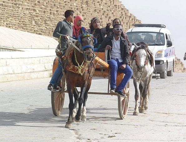 Horse Cart Vacation Travel Tourism Egypt
