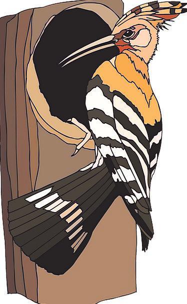 Woodpecker Fowl Sitting Sedentary Bird Nest Tree S