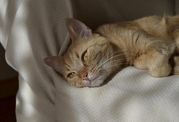 Cat Feline Appearance Animals Faunae Look