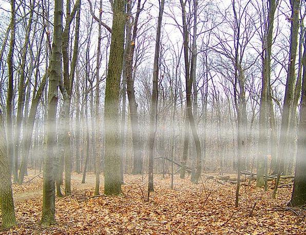 Fog Mist Landscapes Plants Nature Woods Forests Trees