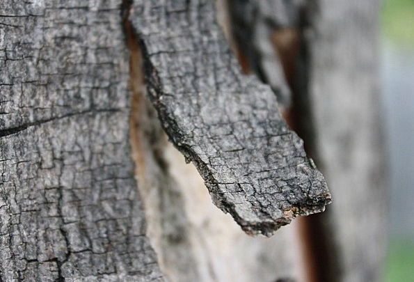 Bark Bay Landscapes Sapling Nature Branch Division