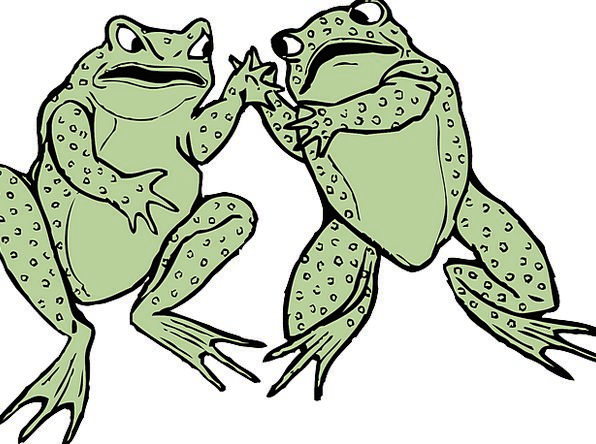 Frogs Lime Grey Old Green Two Amphibians Wildlife