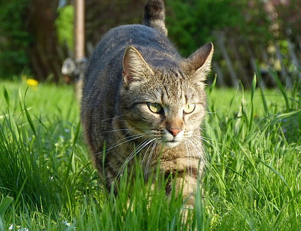 Hangover Aftermath Feline Nature Countryside Cat A