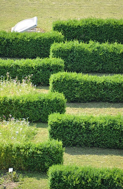 Hedge Hedgerow Structure Construction Hedge Accoun