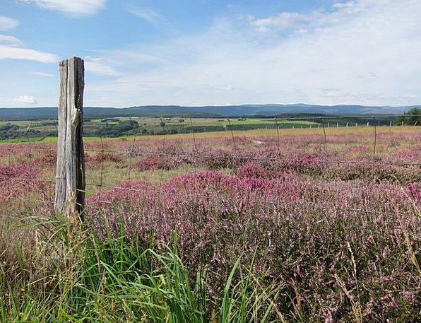 Cévennes Wild Flora Lande