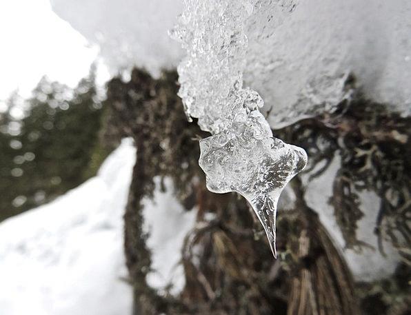 Icicle Stalactite Aquatic Winter Season Water Ice
