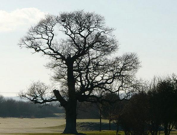 Tree Sapling Landscapes Countryside Nature Natural