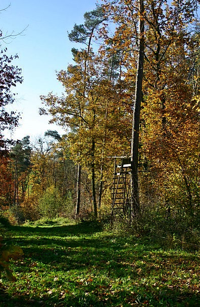 Forest Woodland Landscapes Fall Nature Nature Coun