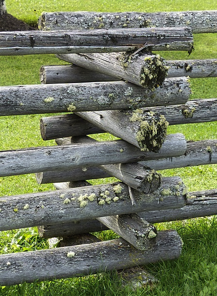 Moss Covered Landscapes Timber Nature Fence Barrie