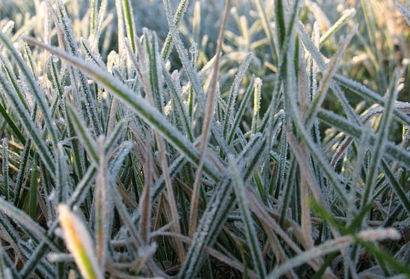 Frost Emotionless Grass Lawn Cold Macro Instructio