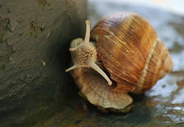 Snail Bomb Animal Physical Shell Land Snail Mollus
