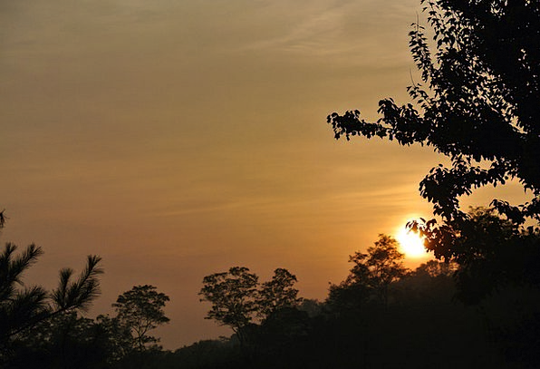 Sunrise Dawn A.m. Wood Timber Morning