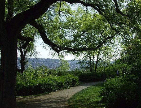 Park Common Tree Sapling Stuttgart Recreation Comp