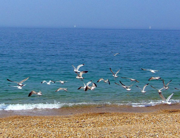Beach Seashore Vacation Travel Sea Marine Seagulls