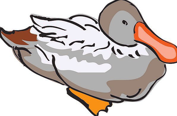 Duck Stoop Fowl Wildlife Nature Bird Hunting Feath