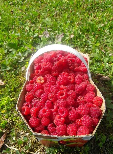 Raspberry Drink Bag Food Summer Straw-hat Basket F