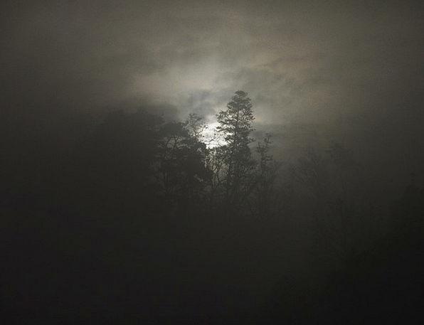 Fog Mist Landscapes Forests Nature Foogy Woods Sun