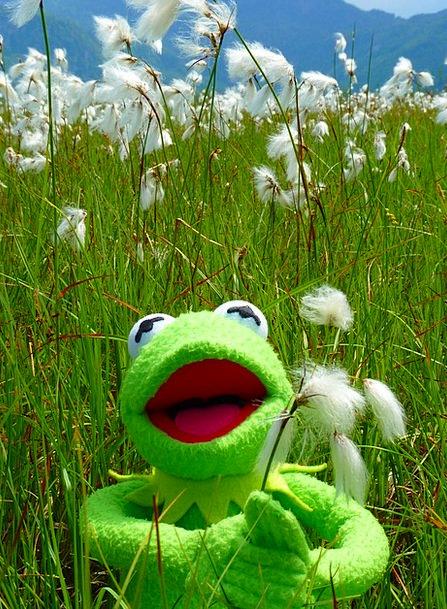 Cottongrass Landscapes Nature Flower Floret Bog Me