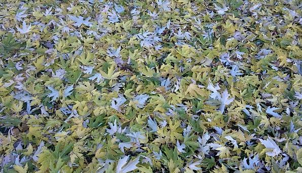 Autumn Fall Greeneries Fall Foliage Leaves