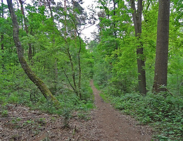 Forest Path Landscapes Woodland Nature Away Absent