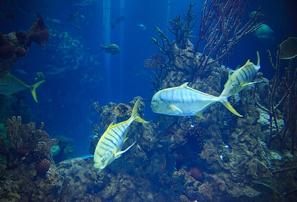 Animal Physical Faunae Aquarium Animals Marine Blu