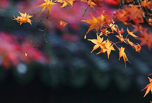 Maple Fall Views Opinions Autumn Late Autumn