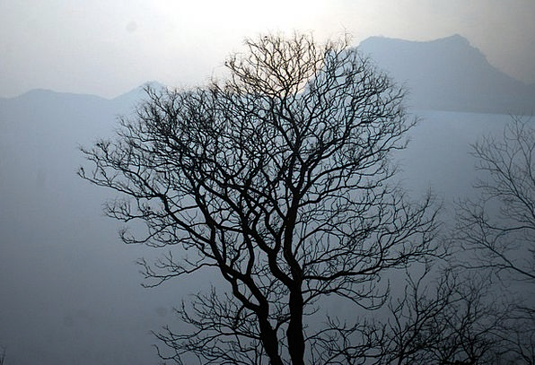 Tree Sapling Landscapes Nature Silhouette Outline
