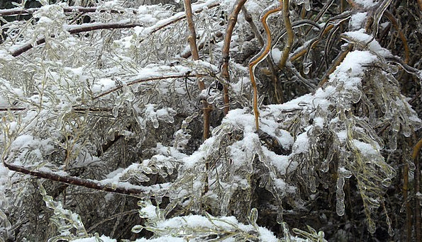 Tree Sapling Snowflake Frozen Ice-covered Snow