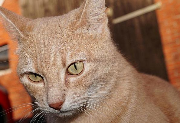 Cat Feline Skull Portrait Representation Head Clos