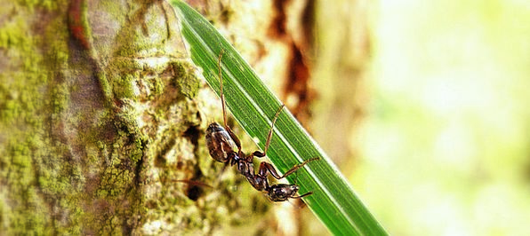 Ant Bay Macro Instruction Bark Antennae Animal Phy