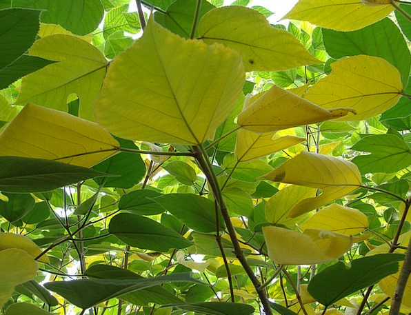 Leaves Greeneries Landscapes Vegetable Nature Yell