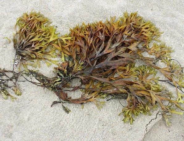 Seaweed Vacation Seashore Travel Sea Marine Beach