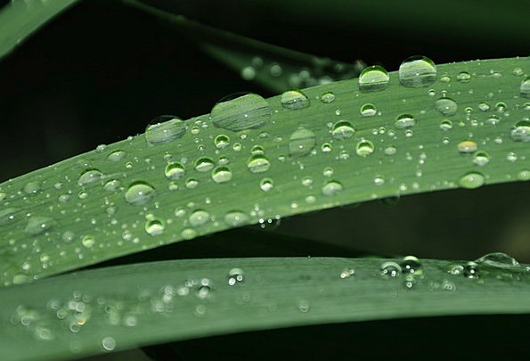 Foliage Greenery Landscapes Droplets Nature Nature