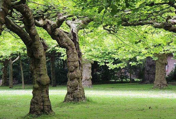 Tree Sapling Landscapes Plants Nature Log Record T