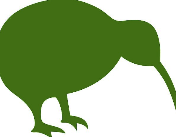 Kiwi Outline Bird Fowl Silhouette Zealand Animal P