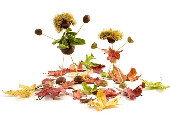 Conker Acorn Conkers Yellow Acorns Thorn Autumn Fa
