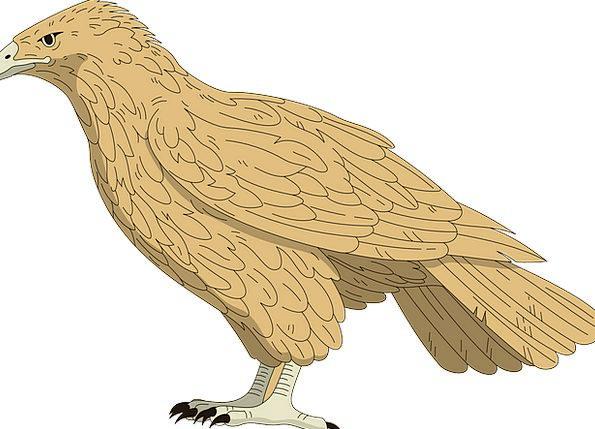 Falcon Fowl Brown Chocolate Bird Wings Annexes Fea