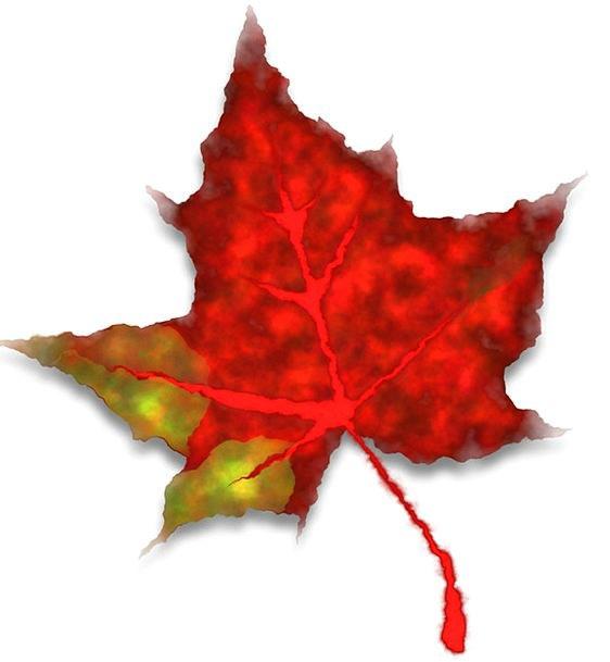 Red Bloodshot Foliage Fall Reduction Leaf Autumn F