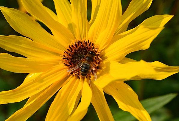 Flower Floret Landscapes Vegetable Nature Yellow C